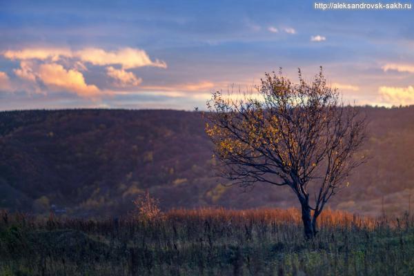 Вечер..дерево