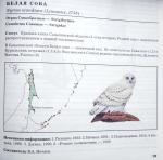 Птицы декабря