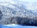 Зима пришла по календарю