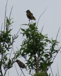 Птицы Александровска