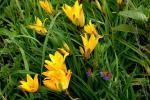 Цветы к празднику от маркиза Клемента Таффанел де ля Жонкиера