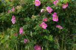Цветы июля
