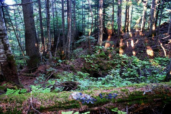 Чем дальше в лес