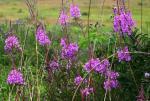 Цветы августа