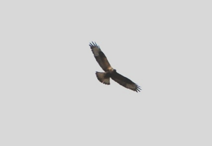 Птицу видно по полету