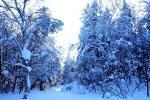 Зимние прогулки-2