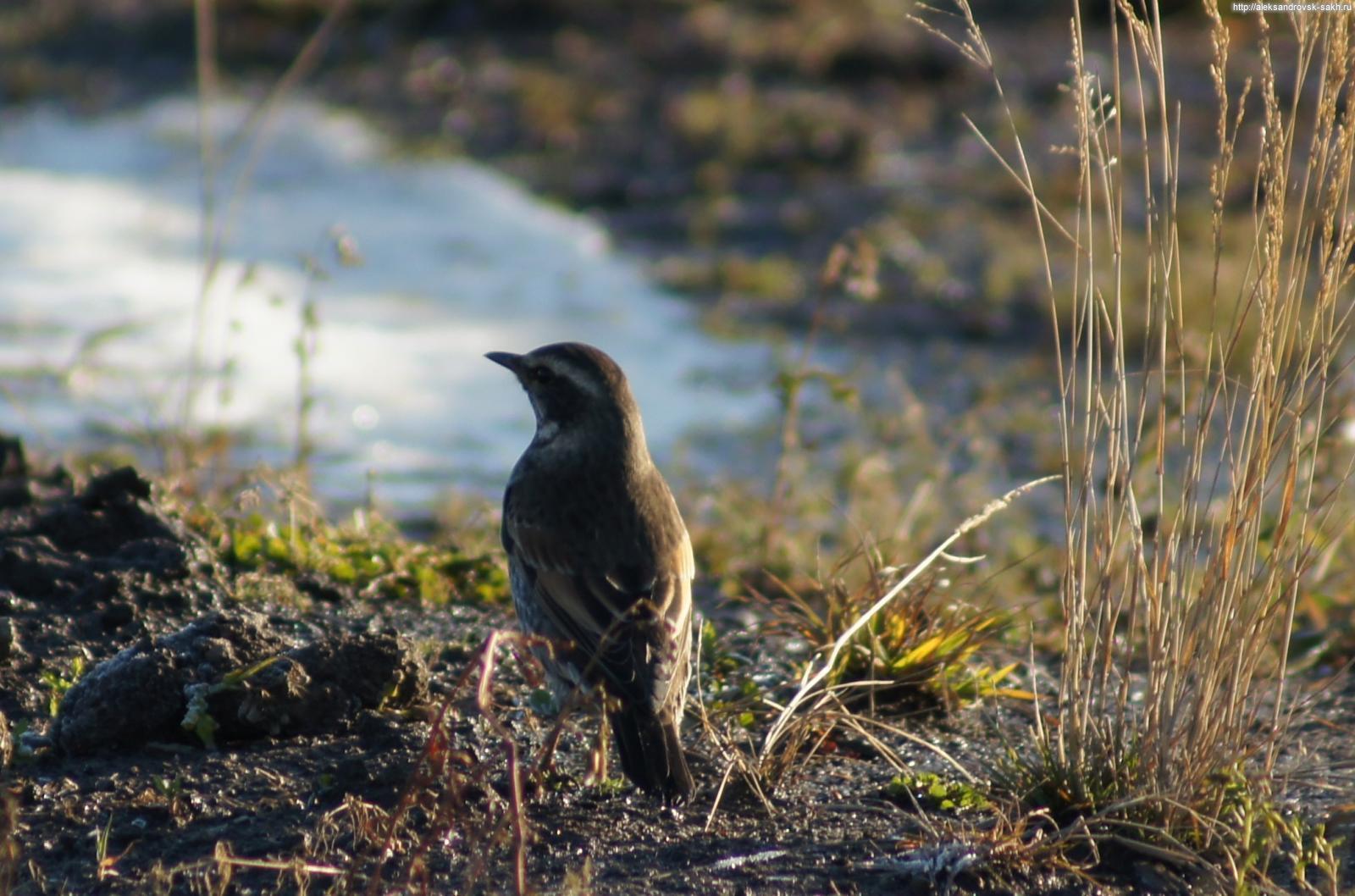 фото галереи птиц