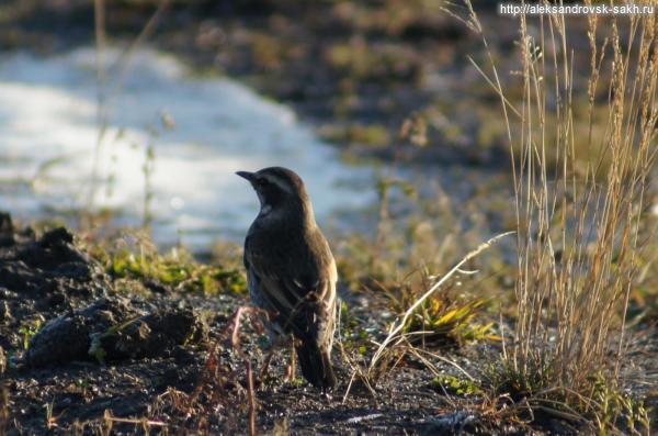 Птицы ноября