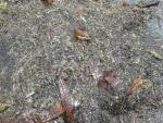 Просто водоросли и морская капуста