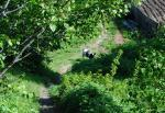 Вернисаж 20.06.2011