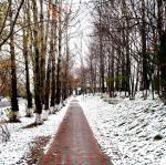 Сегодня в городе снег