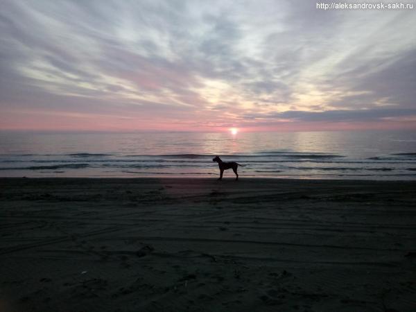 Собака Баскервилей на закате
