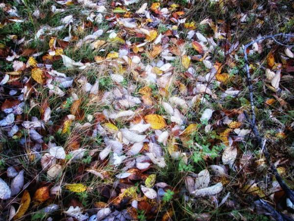 Просто листья
