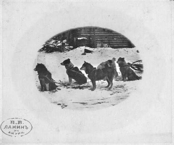 Борис Еллинский о сахалинских ездовых собаках (na0004_13301r.jpg)